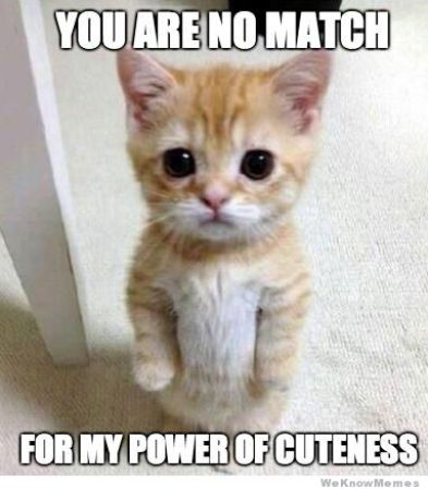 Kitten with text you are no match for my powers of cuteness.